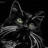 Закрытие форумов - последнее сообщение от Black_cat