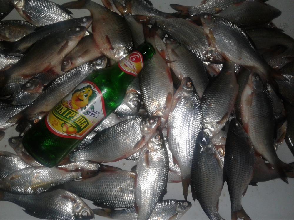 Прогноз рыболова волгодонск