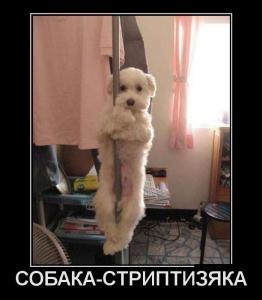 1342420362_demotivatory_08.jpg
