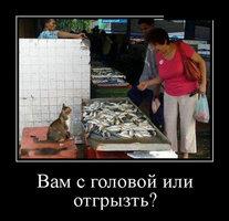 котэ-продавец рыбы.jpg