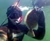 Подводная охота - последнее сообщение от poulino