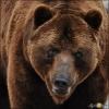 Поймал-отпусти - последнее сообщение от 49 медведей