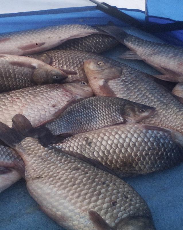 Рыбалка на цимлянское водохранилище
