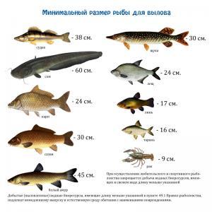 рыбы-размер.jpg