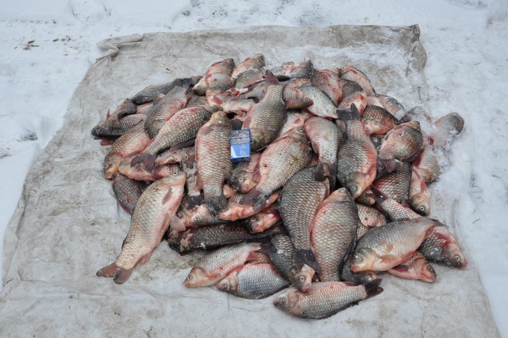 Зимняя ловля на цимлянском водохранилище