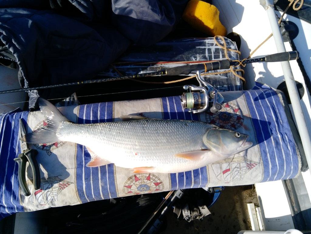 Рыбалка в володарском районе астраханской области